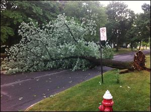 A tree lies across the road in the 2500 block of Cheltenham Road, just south of Kenwood Blvd. in the Old Orchard neighborhood of West Toledo.