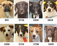dogs-for-adoption-7-12