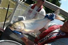 Asian-Carp-Science-fishing