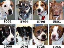 Dogs-for-adoption-7-14
