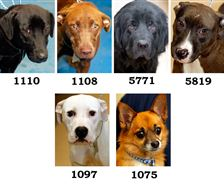 Dogs-for-adoption-7-25