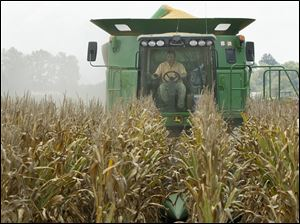 A worker drives a combine harvesting corn in a field near Altheimer, Ark. Crop yields are expected to be down from previous years because of drought conditions.