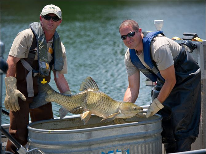 Marrs Lake  State district fisheries biologists examine a grass carp taken from Marrs Lake in Cambridge Township in Lenawee County.