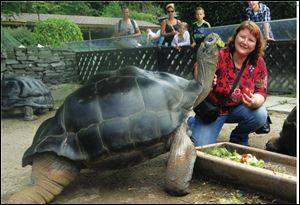 Author Wendy Gomersall spends time with Poldi. the tortoise's keepers in Austria say he is the more social of the pair and loves to have his neck scratched.
