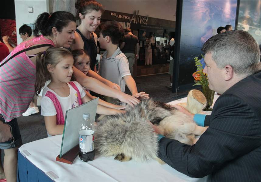 Visitors-meet-wolf-fur-a-polar-bear-foot