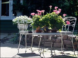 Geraniums occupy a metal table.