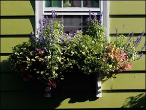Flowers thrive in a window planter.