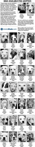 Dogs-available