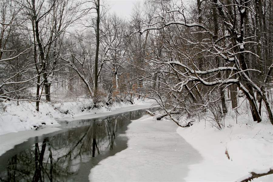 Snowy-serenity-along-Swan-Creek