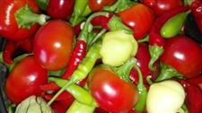 sweet-and-hot-peppers