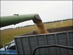 Soy beans move from the combine operated by Douglas Pratt, 79, to a waiting truck.
