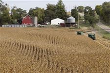 Corn-being-harvested-at-Duane-Braesch-s-farm-in-Bennington-Neb