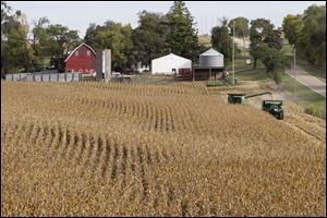 Corn being harvested at Duane Braesch's farm in Bennington, Neb.  Braesch's cornfields are prime evidence of how unforgiving the elements have been for him and so many others across the Midwest this summer.