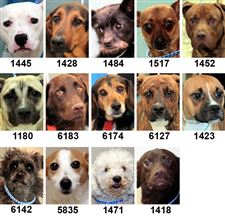 Dogs-for-adoption-9-28