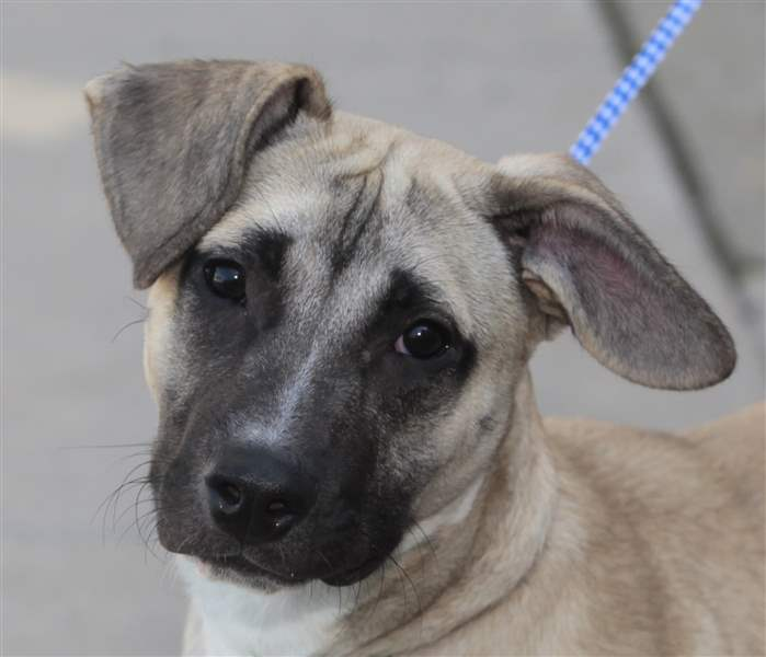 dogs-for-adoption-9-29
