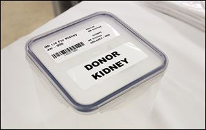 A lid for a donor kidney used during a kidney transplant.