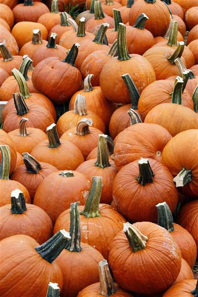 Pumpkin-crop-drought