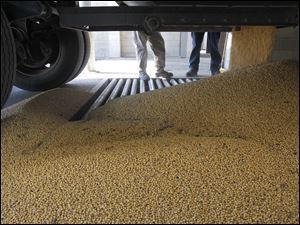 Soy beans are dumped from a truck into an underground bin at the Mid-Wood Inc. grain elevator in Bowling Green, Ohio.