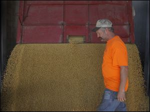 Portage, Ohio farmer Rod Canterbury unloads soy beans at the Mid-Wood Inc. grain elevator in Bowling Green, Ohio.