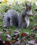 Food-And-Farm-Squirrel-Boom-10-19