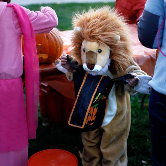 pumpkin-carving-lion