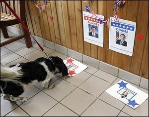 Brutus sniffs around Mitt Romney during an event in which dogs 'vote' by choosing a treat to eat from one of two mats with the candidates' pictures. The event was Sunday in Monclova Township.