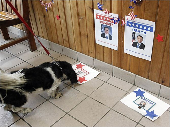 Brutus sniffs around Mitt Romney Brutus sniffs around Mitt Romney during an event in which dogs 'vote' by choosing a treat to eat from one of two mats with the candidates' pictures. The event was Sunday in Monclova Township.