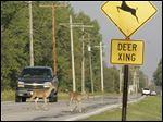 http://www.toledoblade.com/image/2012/11/07/150x_b1_a4-3_cCM_cB/Deer-crossing-field.jpg