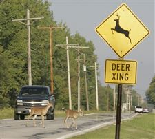 Deer-crossing-field