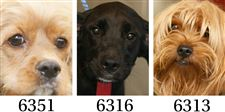Dogs-for-adoption-11-7
