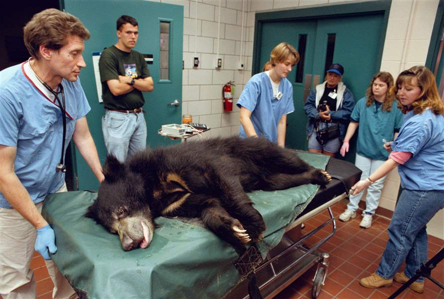 CTY-SLOTH-BEAR-ZOO-EXAM-2