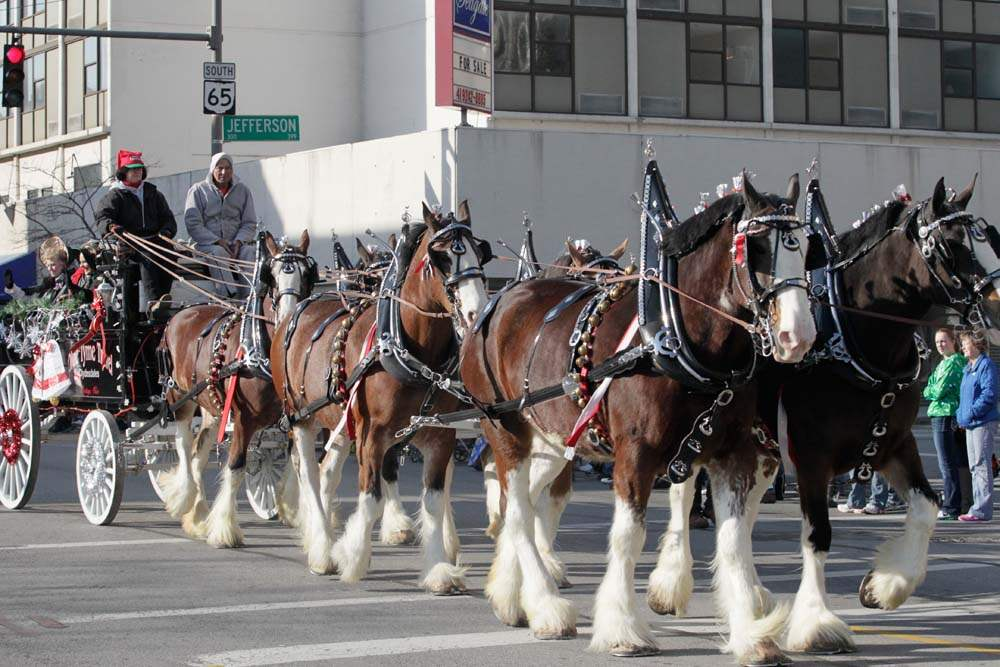 Holiday-Parade-Clydesdales