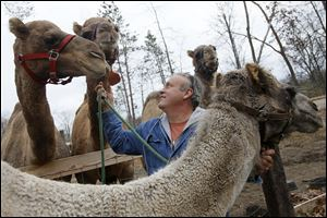 Joe Garverick is working to establish a camel milk business at his 36-acre farm in Lambertville. Camel milk sells for $11 a pint and he says it is more nutritious than cow's milk.