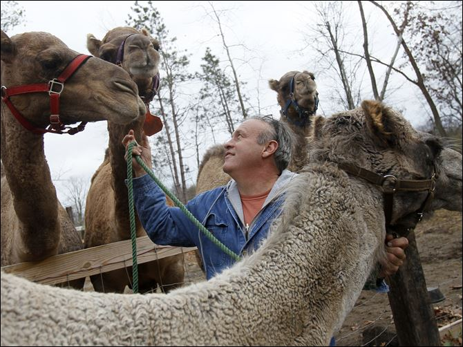 NBRN camels19p-1 Joe Garverick is working to establish a camel milk business at his 36-acre farm in Lambertville. Camel milk sells for $11 a pint and he says it is more nutritious than cow's milk.