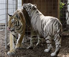 Exotic-Animals-Crackdown-Ohio-1