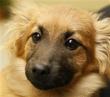 Dogs-for-adoption-Ollie