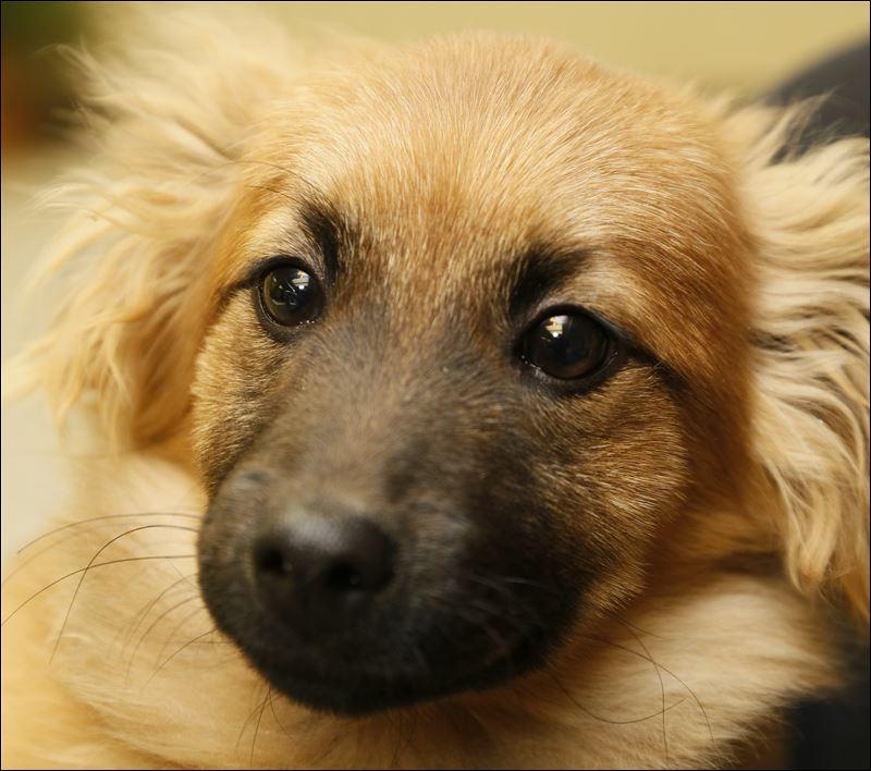 Large Breed Dog Adoptions