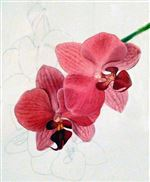 orchid-watercolor