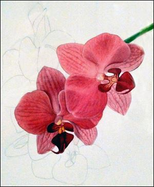 Cool Yule exhibit Magenta Orchid..., David Herzig, Watercolor.