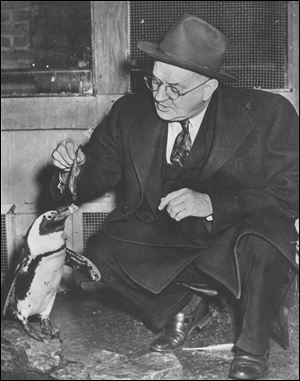 Frank 'Curly' Skeldon, feeding a penguin in 1949, became director of the zoo in 1926. Mr. Skeldon, a Blade business reporter and editor, received a token salary of $1 a month
