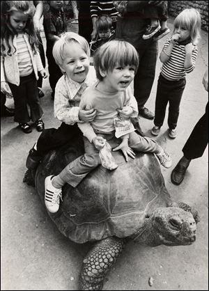 A pair of brothers hang on while riding Galopy in September, 1972. Despite enormous popularity among area children, the 60-year-old Galopy was given to the San Diego Zoo in 1983 after only 32 years at the Toledo Zoo. Such tortoises have a life expectancy of more than 150 years.