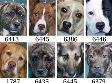 Dogs-for-adoption-part-1-12-1