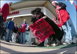 Tinker, a miniature horse, rings a red bell for the Salvation Army with his owner Carol Takacs in West Bend, Wis. Takacs says his name was Tinker when she and her husband got him and they couldn't have named him better if they tried. (AP Photo/Carrie Antlfinger)