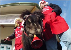 Tinker, a miniature horse, rings a red bell for the Salvation Army outside a craft fair in West Bend, Wis. with his owners Carol and Joe Takacs. Salvation Army officials say Tinker raises 10 times more than a regular bell ringer.