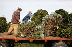 Gordon Rhoades, left, and field manager David Burkett load trees onto a wagon at Rhoades Christmas Tree Farm in Whitehouse.