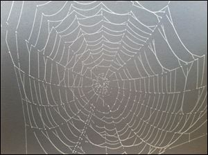 Monday morning fog sparkles on a spider's web in Toledo.