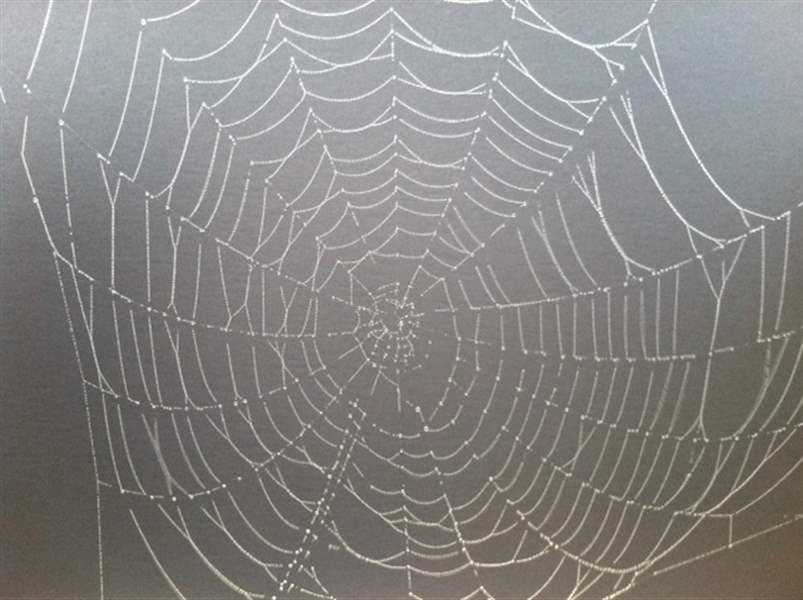 foggy-spider-web