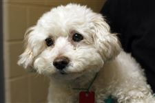 Dogs-for-adoption-Menchi