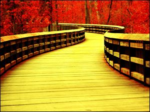 """Yellow Boardwalk,"" fine art photography by Janelle Lorenzen."