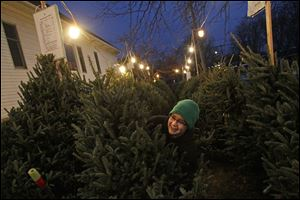 Keegan Miller, 15, center, rearranges Christmas trees while working as a salesman on the lot Tuesday evening outside the Perrysburg Presbyterian Church near downtown Perrysburg.